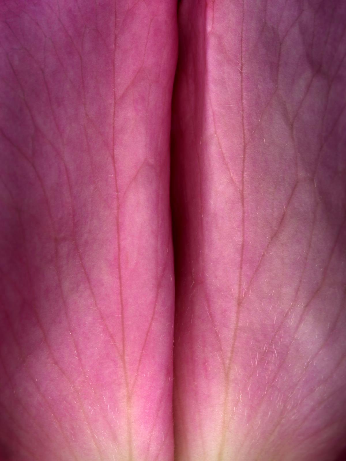Hermann Försterling, Rose Nr. 011, 2004, Inkjet auf handbeschichtetem Bütten, 40 cm x 53 cm, (im Passepartout 70 cm x 80 cm), Auflage: 12